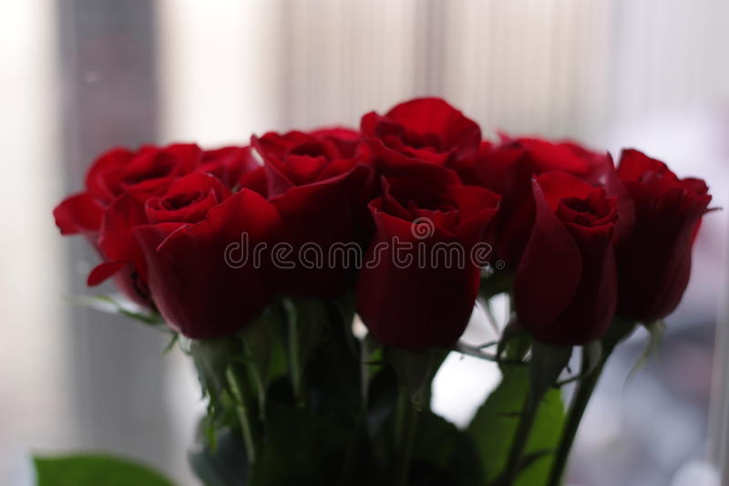 2 τριαντάφυλλα στοκ φωτογραφία