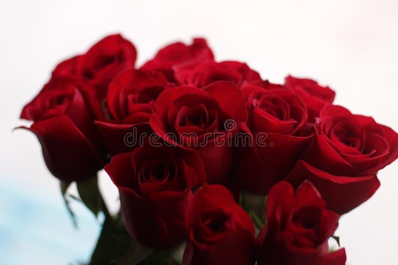 Τριαντάφυλλα 4 στοκ φωτογραφία με δικαίωμα ελεύθερης χρήσης