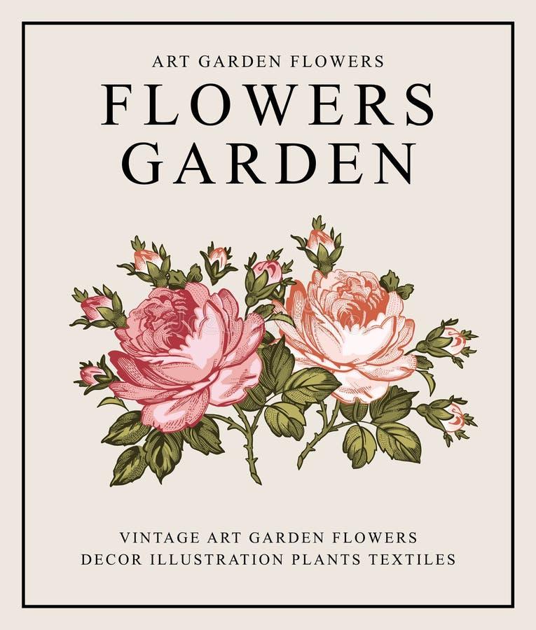 τριαντάφυλλα floral επίσης corel σύρετε το διάνυσμα απεικόνισης ελεύθερη απεικόνιση δικαιώματος