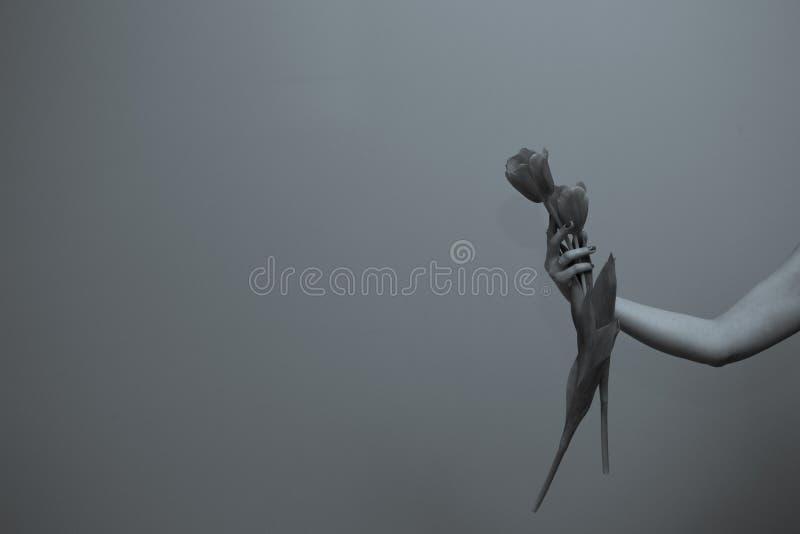Τριελαϊκή τουλίπα στο χέρι της γυναίκας στοκ φωτογραφίες με δικαίωμα ελεύθερης χρήσης