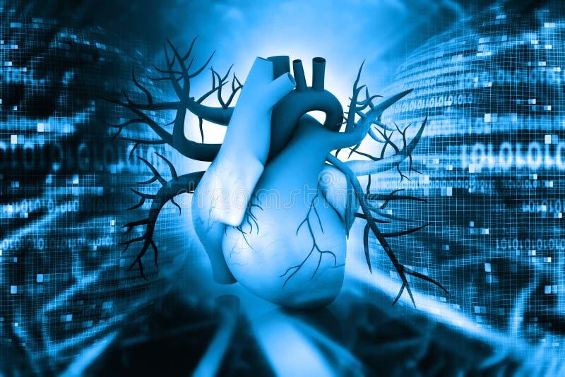 τρισδιάστατη ανθρώπινη καρδιά απεικόνιση αποθεμάτων