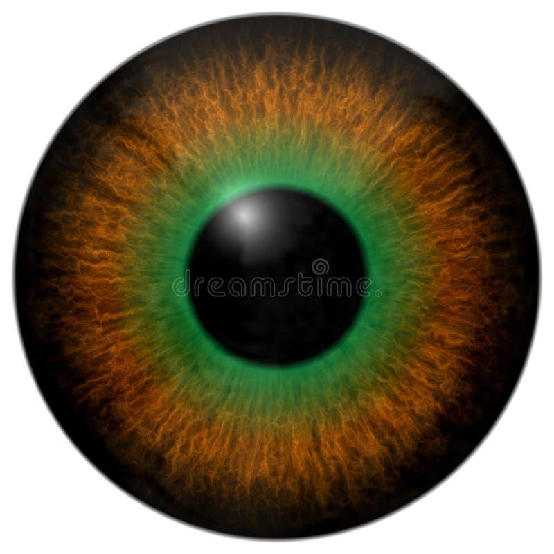Τρισδιάστατη σύσταση ματιών βατράχων, ζωικό μάτι διανυσματική απεικόνιση