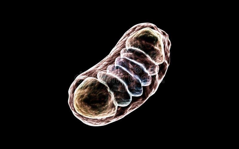 τρισδιάστατη ψηφιακή απεικόνιση των μιτοχονδρίων στο σκοτεινό υπόβαθρο διανυσματική απεικόνιση