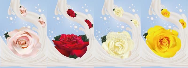 τρισδιάστατος ρεαλιστικός αυξήθηκε με την κινηματογράφηση σε πρώτο πλάνο παφλασμών γάλακτος Όμορφα τριαντάφυλλα κίτρινα, κόκκινα, διανυσματική απεικόνιση