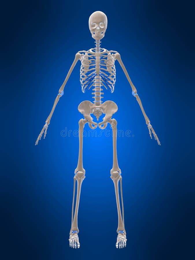 τρισδιάστατος σκελετό&sigm διανυσματική απεικόνιση