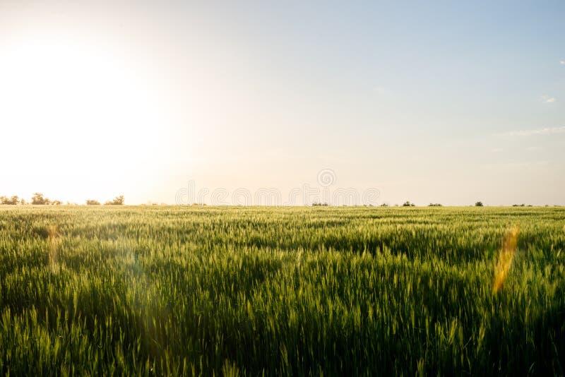 τρισδιάστατο πρότυπο ηλιοβασίλεμα χλόης στοκ φωτογραφία με δικαίωμα ελεύθερης χρήσης