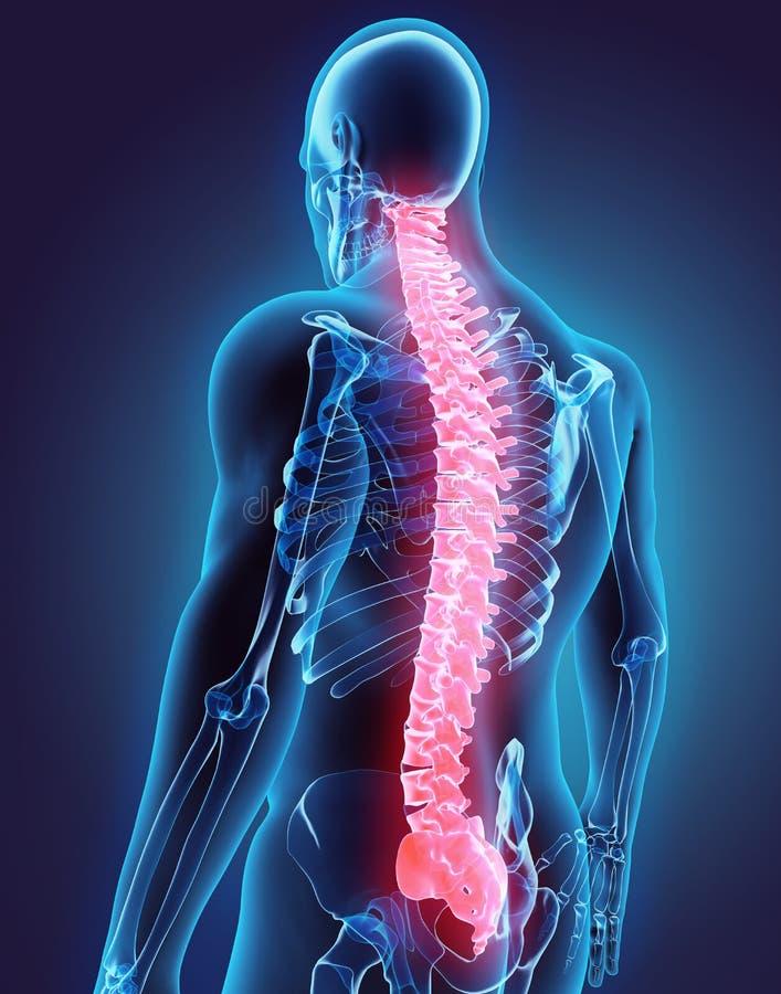 τρισδιάστατη απεικόνιση της σπονδυλικής στήλης, ιατρική έννοια διανυσματική απεικόνιση