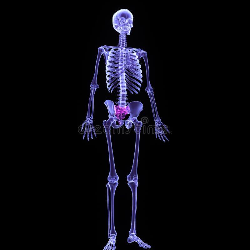 τρισδιάστατη απεικόνιση της σπονδυλικής στήλης - μέρος ανθρώπινου οργανικού στοκ φωτογραφία με δικαίωμα ελεύθερης χρήσης