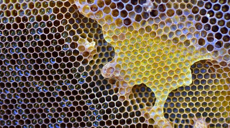 τρισδιάστατη εικόνα απεικονίσεων μελιού χτενών στοκ φωτογραφία με δικαίωμα ελεύθερης χρήσης