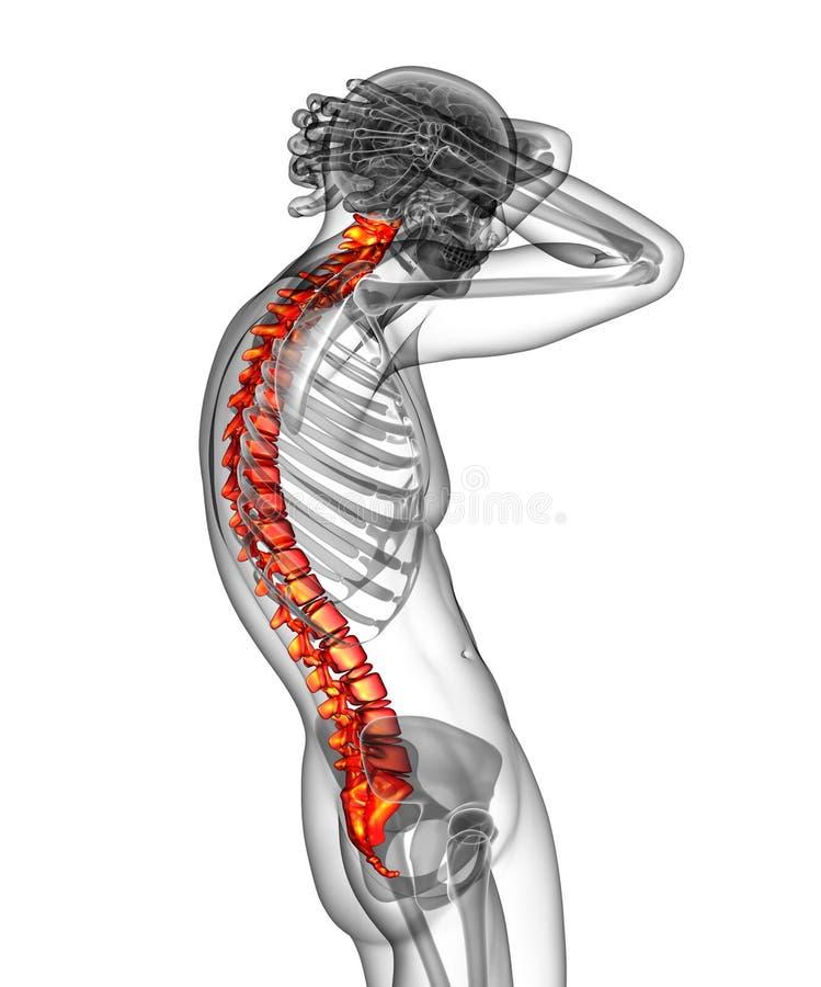 τρισδιάστατος δώστε την ιατρική απεικόνιση της ανθρώπινης σπονδυλικής στήλης διανυσματική απεικόνιση