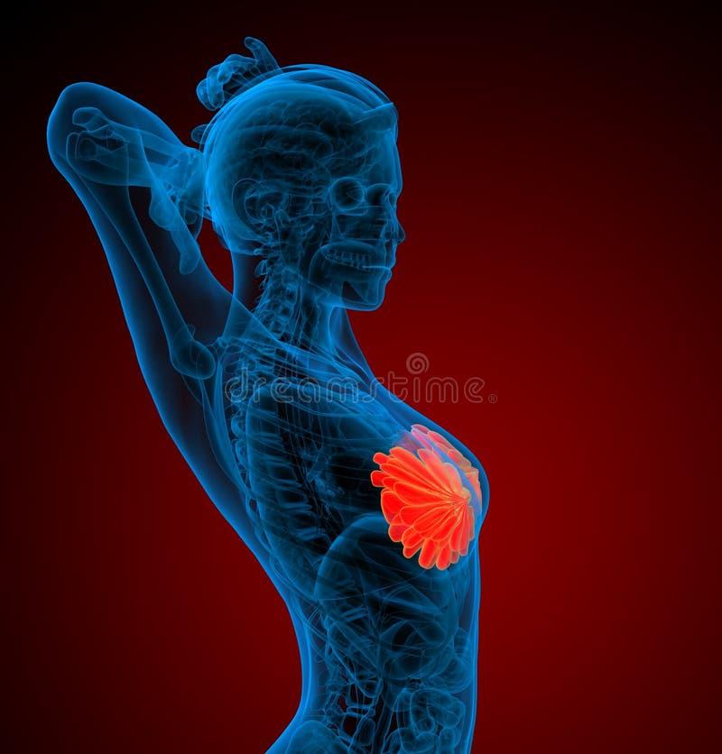 τρισδιάστατος δώστε την ιατρική απεικόνιση του ανθρώπινου στήθους απεικόνιση αποθεμάτων