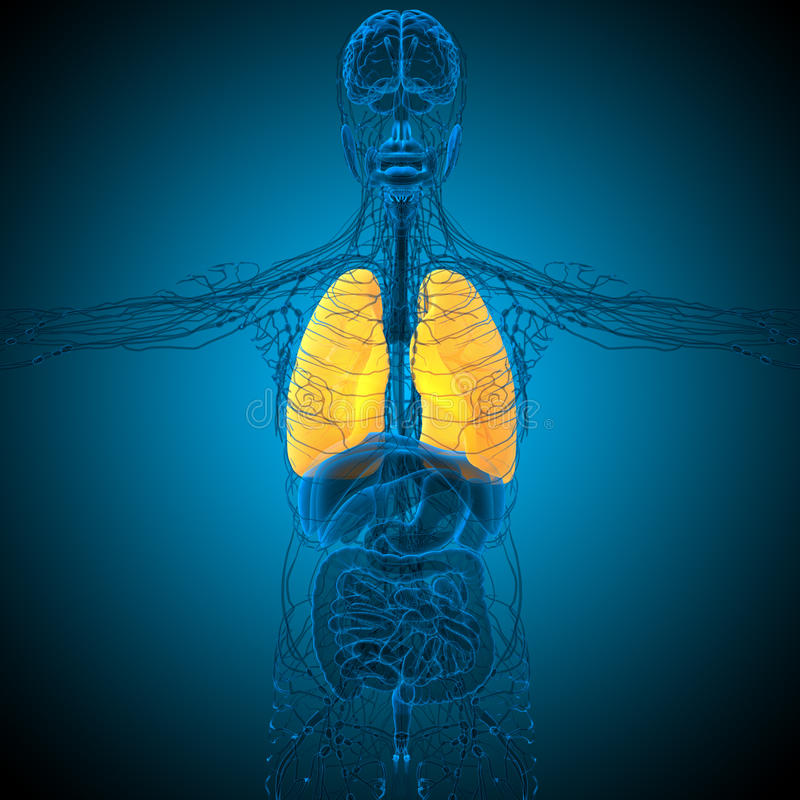 τρισδιάστατος δώστε την ιατρική απεικόνιση του πνεύμονα απεικόνιση αποθεμάτων