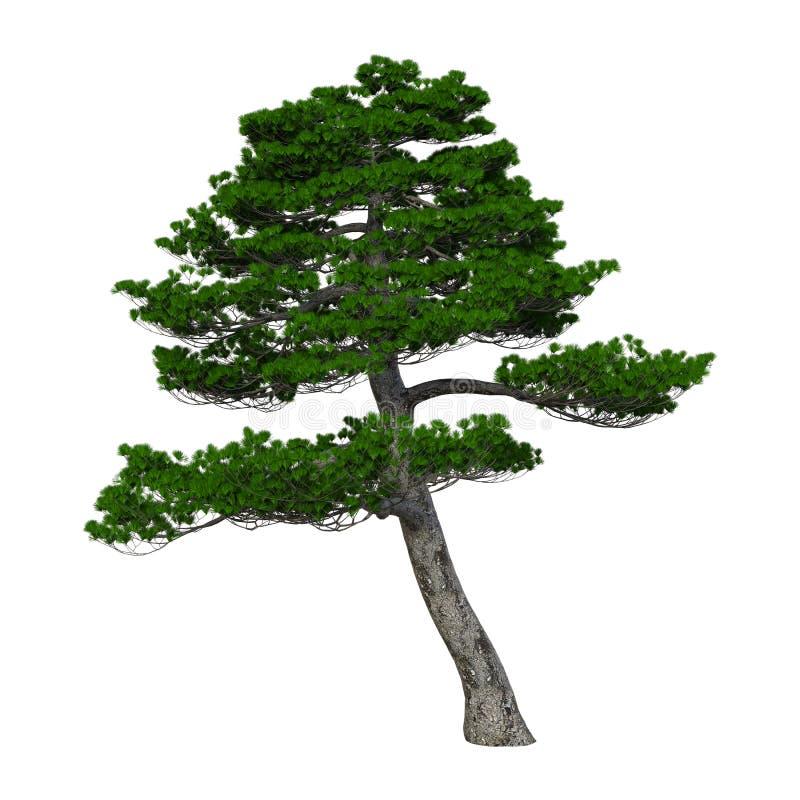 τρισδιάστατο δέντρο πεύκων απόδοσης ιαπωνικό στο λευκό στοκ εικόνα