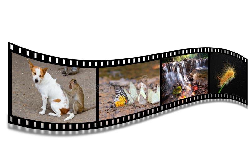 τρισδιάστατο λευκό λουρίδων ταινιών ανασκόπησης στοκ εικόνα με δικαίωμα ελεύθερης χρήσης