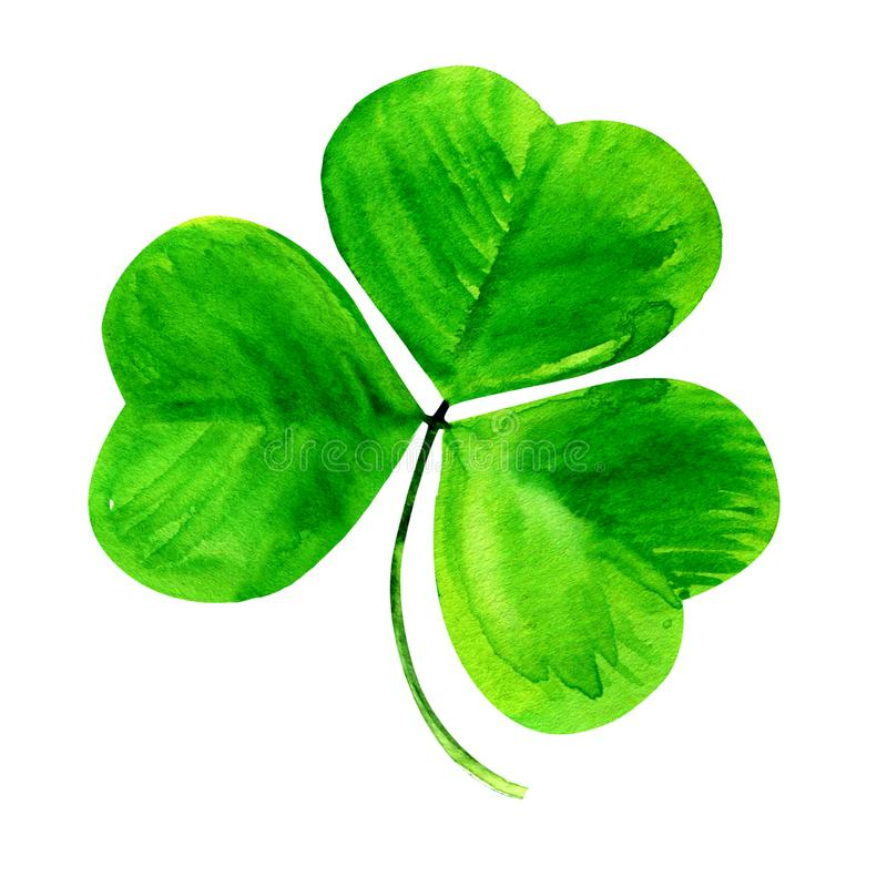 Τριφύλλι, πράσινο τριφύλλι τρία φύλλο, σύμβολο ημέρας του Πάτρικ, που απομονώνεται, συρμένη χέρι απεικόνιση watercolor στο άσπρο  διανυσματική απεικόνιση