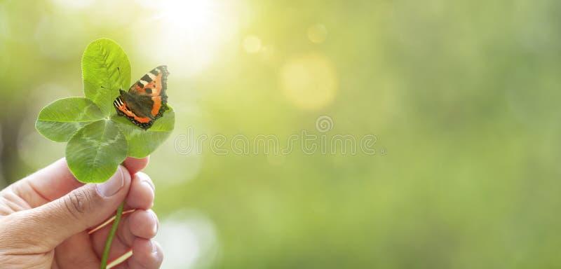 Τριφύλλι τέσσερις-φύλλων με την πεταλούδα στοκ φωτογραφίες
