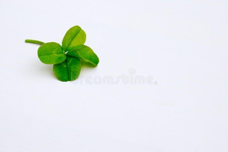 Τριφύλλι τεσσάρων φύλλων που απομονώνεται στο άσπρο υπόβαθρο με το διάστημα αντιγράφων Έννοια τύχης θερινής τύχης φύσης Ημέρα του στοκ φωτογραφία με δικαίωμα ελεύθερης χρήσης