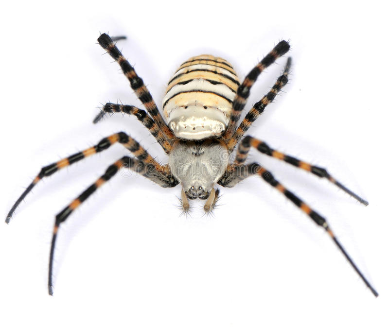 τριχωτή αράχνη στοκ φωτογραφίες με δικαίωμα ελεύθερης χρήσης