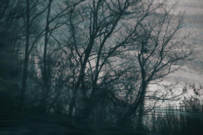 Τρομακτικές μουτζουρωμένες καλλιτεχνικές σκιαγραφίες δέντρων στοκ εικόνες