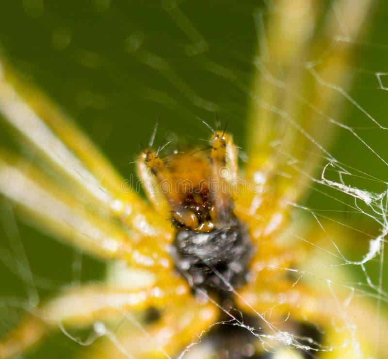 Τρομακτική αράχνη στη φύση Μακροεντολή στοκ φωτογραφία