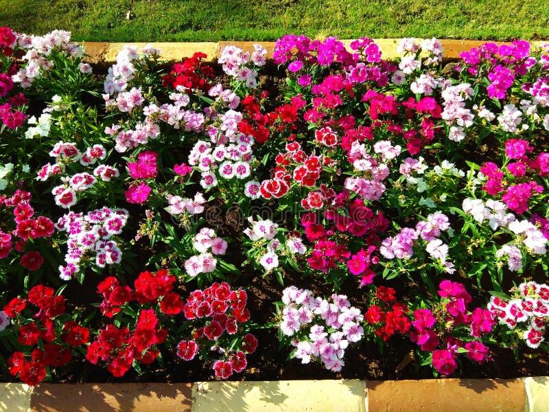 Τρομερή κηπουρική στοκ φωτογραφία με δικαίωμα ελεύθερης χρήσης