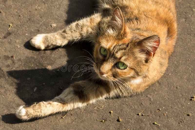 Τρομερή κόκκινη γάτα με τα πράσινα μάτια που βρίσκονται στο πεζοδρόμιο στοκ φωτογραφία