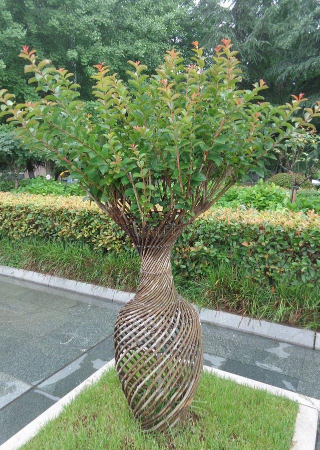 Τρομερό μικρό δέντρο στο φυσικό βάζο στοκ εικόνες με δικαίωμα ελεύθερης χρήσης