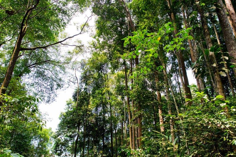 Τροπικά δασικά δέντρα στοκ φωτογραφίες