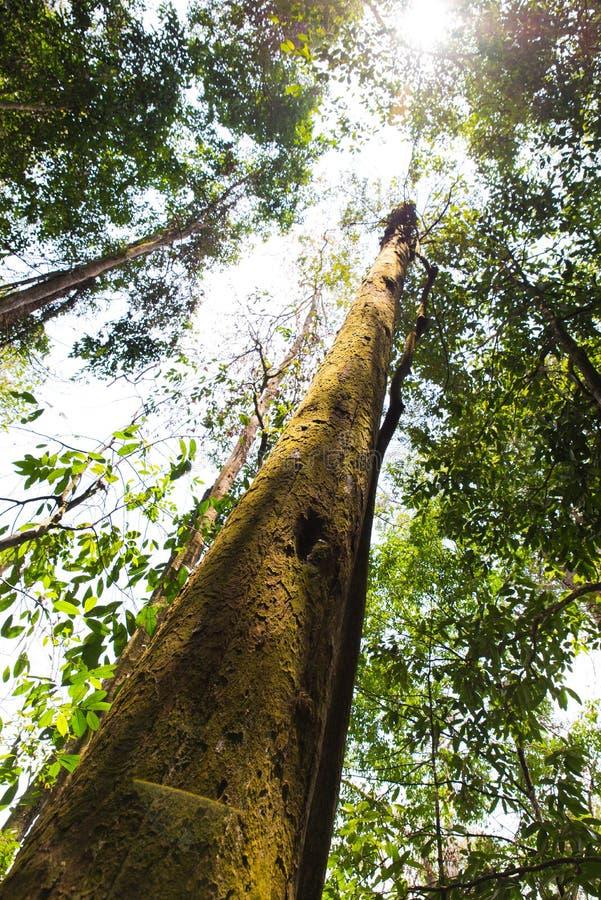 Τροπικά δασικά δέντρα στοκ εικόνες