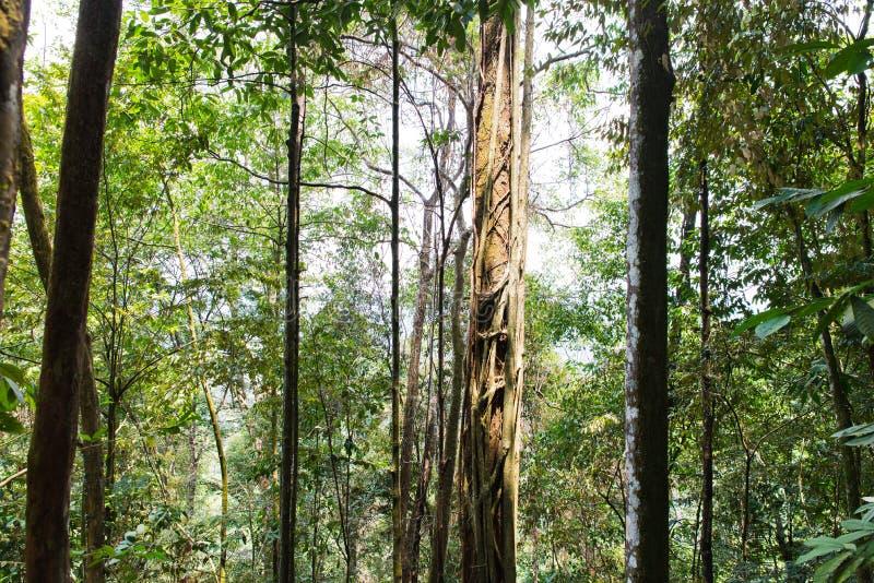 Τροπικά δασικά δέντρα στοκ φωτογραφία