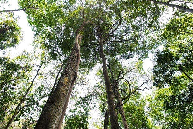 Τροπικά δασικά δέντρα στοκ εικόνα με δικαίωμα ελεύθερης χρήσης