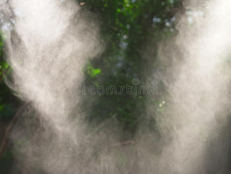 Τροπικά ζούγκλα/τροπικό δάσος στην υδρονέφωση στα ξημερώματα στοκ εικόνες με δικαίωμα ελεύθερης χρήσης