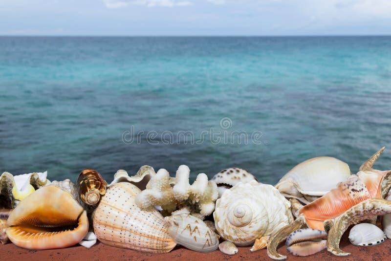 Τροπικά κοχύλια και μπλε θάλασσα στοκ εικόνα
