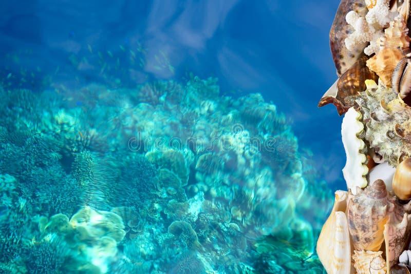Τροπικά κοχύλια και μπλε σκόπελος στοκ εικόνες με δικαίωμα ελεύθερης χρήσης