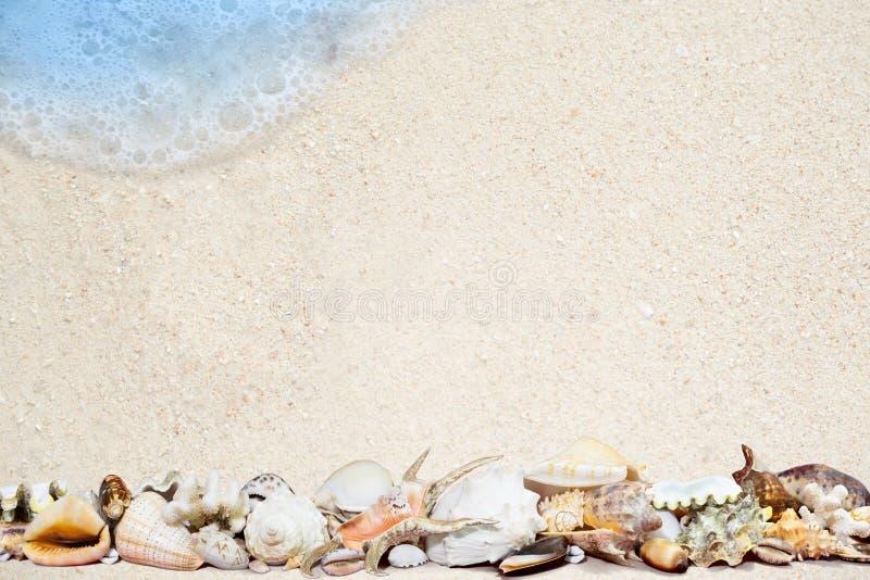 Τροπικά κοχύλια σε μια αμμώδη παραλία στοκ εικόνα με δικαίωμα ελεύθερης χρήσης