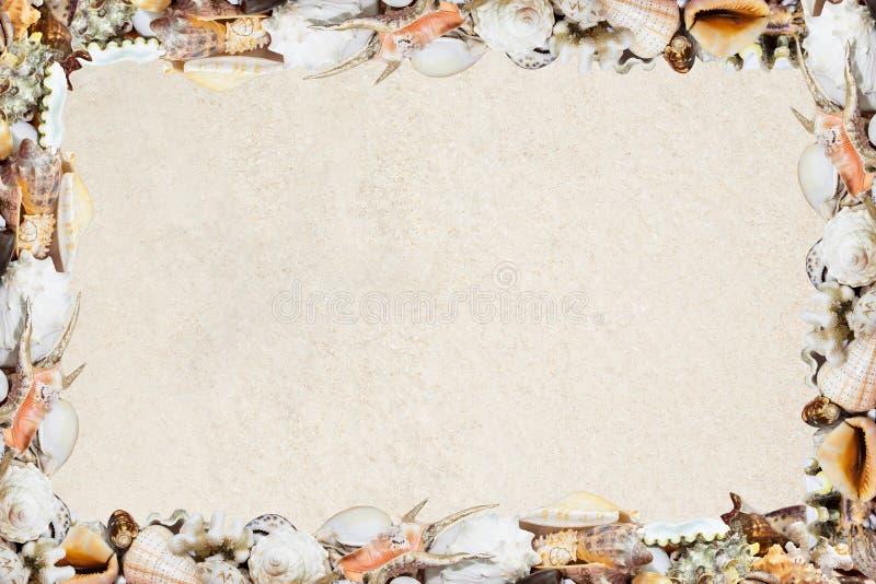 Τροπικά κοχύλια σε μια αμμώδη παραλία στοκ φωτογραφία