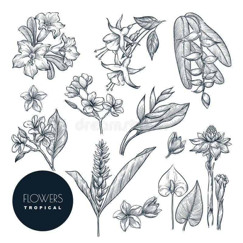 Τροπικά λουλούδια καθορισμένα, απομονωμένος στο άσπρο υπόβαθρο Διάνυσμα sketc απεικόνιση αποθεμάτων