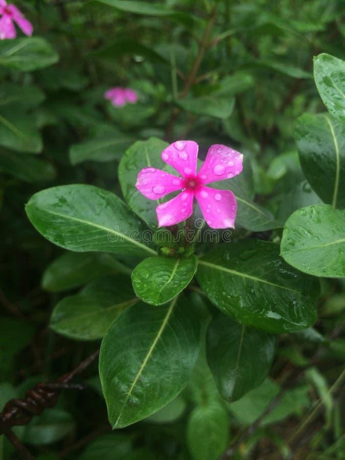 Τροπικά λουλούδια στην άνθιση στοκ φωτογραφίες