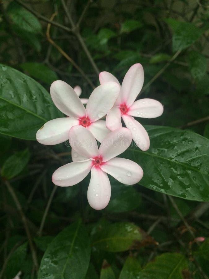 Τροπικά λουλούδια στην άνθιση στοκ εικόνα με δικαίωμα ελεύθερης χρήσης