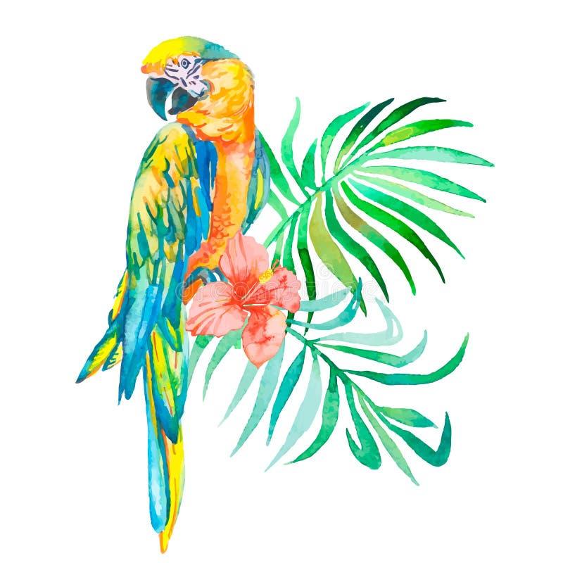 Τροπικά πουλιά που απομονώνονται στο άσπρο υπόβαθρο macaws τέχνη απεικόνιση αποθεμάτων