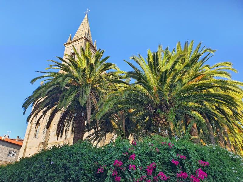 Τροπικά φυτά και εκκλησιαστικός πύργος στοκ εικόνα