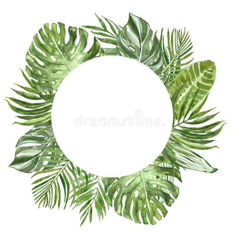 Τροπικά φυτά και φύλλα Watercolor γύρω από το πλαίσιο φύλλο φοινικών, monstera, φύλλωμα μπανανών Έμβλημα πρασινάδων ελεύθερη απεικόνιση δικαιώματος