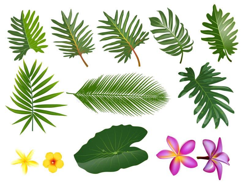 Τροπικά φύλλα καθορισμένα Διανυσματική απεικόνιση τέχνης συνδετήρων με απλή GR διανυσματική απεικόνιση