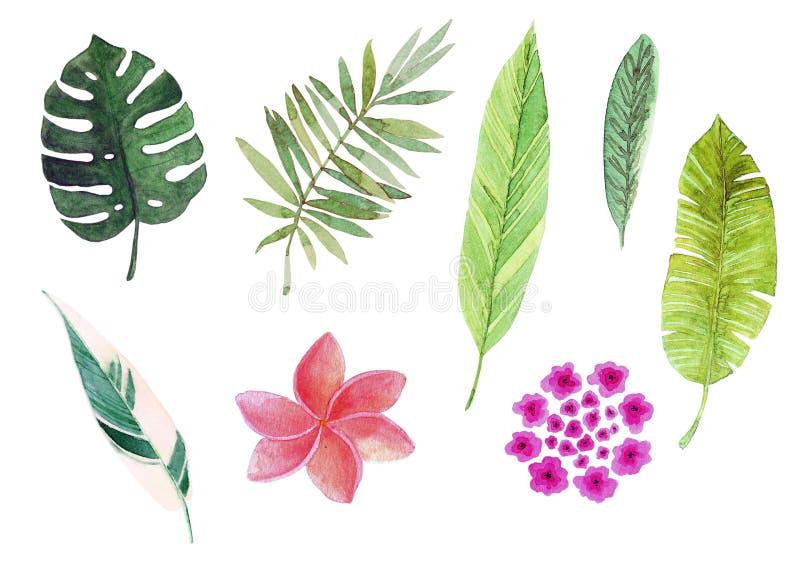 Τροπικά φύλλα και λουλούδια Watercolor ελεύθερη απεικόνιση δικαιώματος