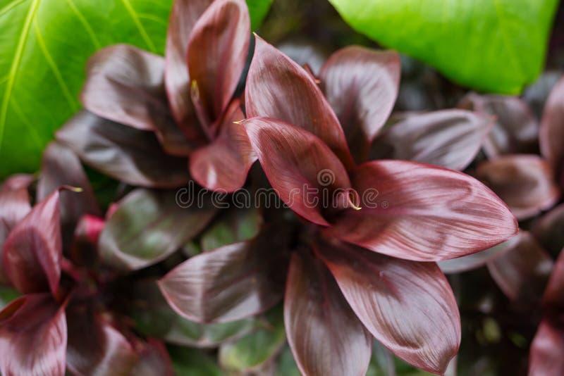 Τροπικά φύλλα, μεγάλο υπόβαθρο φύσης φυλλώματος στο Μπαλί στοκ εικόνες