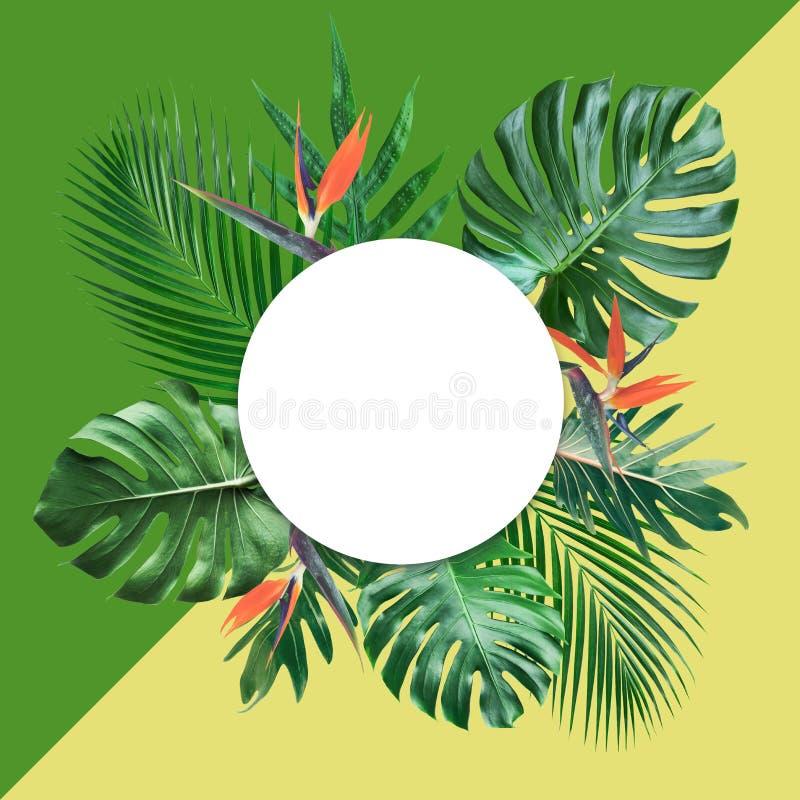 Τροπικά φύλλα με το άσπρα διάστημα αντιγράφων και το υπόβαθρο κρητιδογραφιών χρώματος ελεύθερη απεικόνιση δικαιώματος
