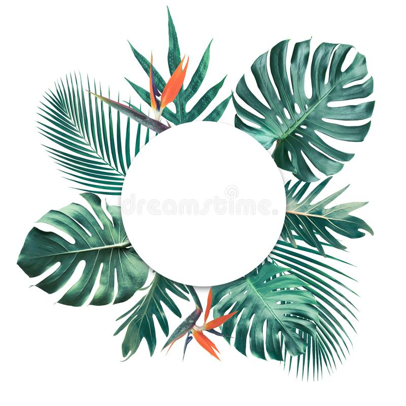 Τροπικά φύλλα με το άσπρο διαστημικό υπόβαθρο αντιγράφων Φύση και καλοκαίρι διανυσματική απεικόνιση