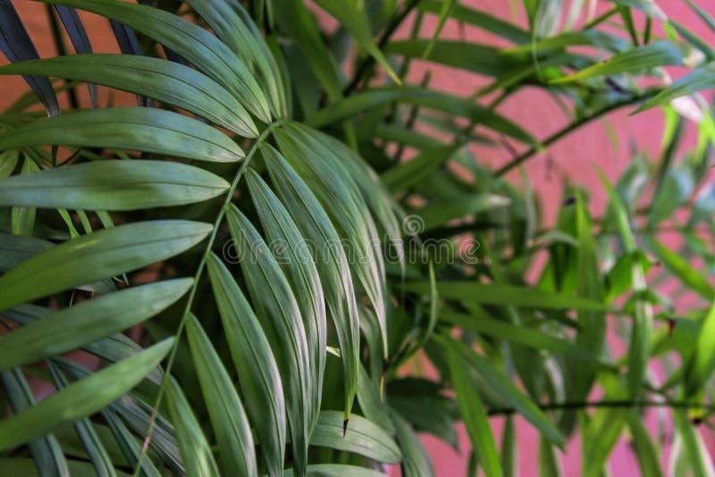 Τροπικά φύλλα στο ρόδινο υπόβαθρο κρητιδογραφιών λεπτομερές ανασκόπηση floral διάνυσμα σχεδίων στοκ φωτογραφία με δικαίωμα ελεύθερης χρήσης