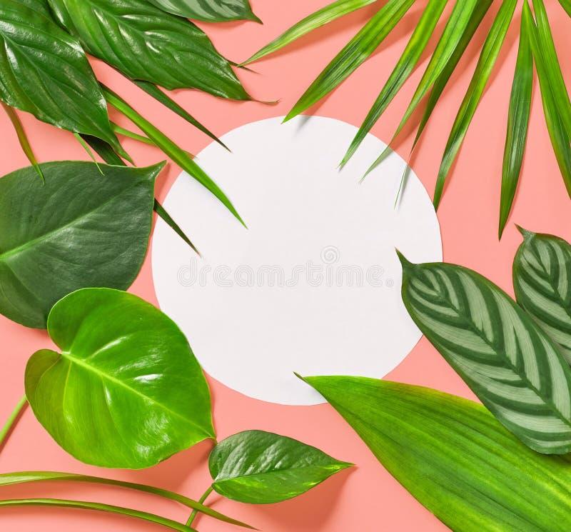 Τροπικά φύλλα στο ρόδινο υπόβαθρο στοκ εικόνες