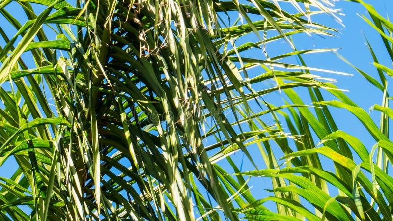 Τροπικά φύλλα στο φωτεινό φως του ήλιου στοκ εικόνα